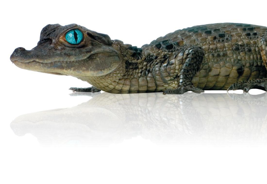 crocodile nil nettoyage industriel